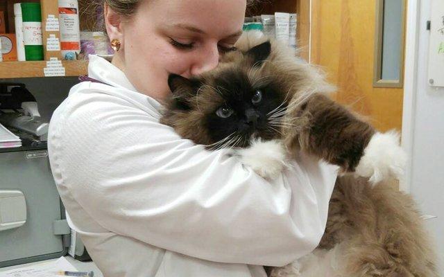 vet tech holding cat