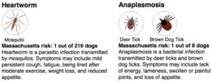 Heartworm disease, anaplasmosis, heartworm risk, anaplasmosis risk, pet heartworm risk