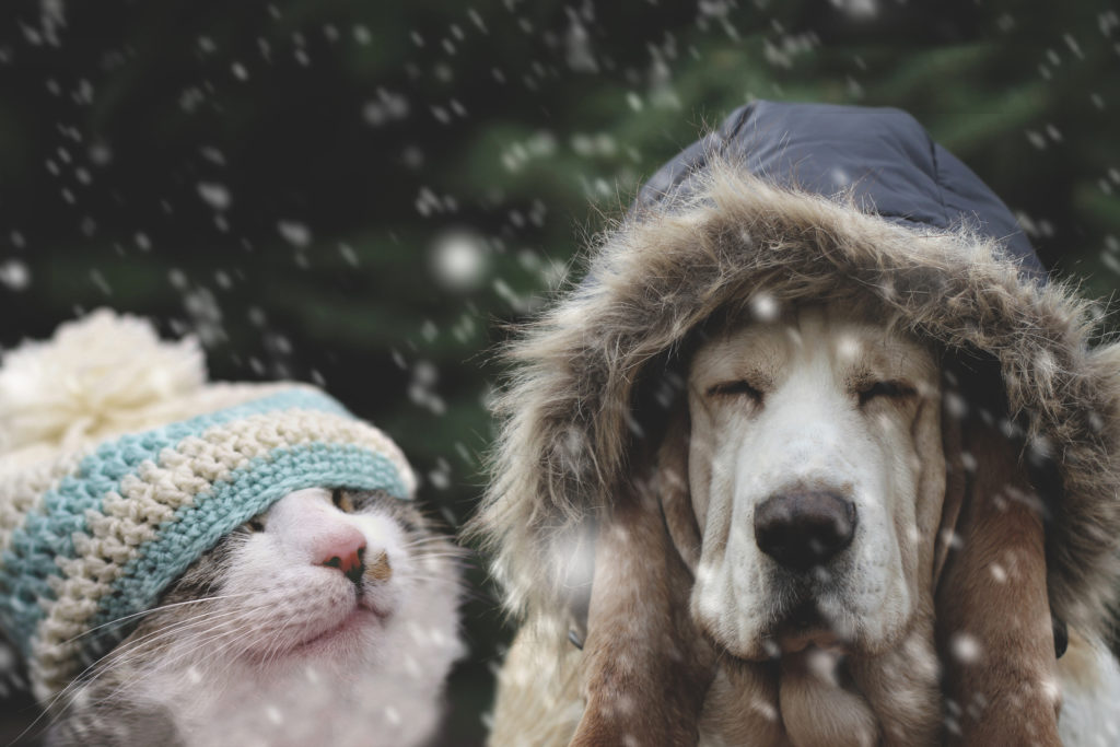 Keep Your Pets Warm, Happy, And Healthy This Winter With These Cold Weather Safety Tips!