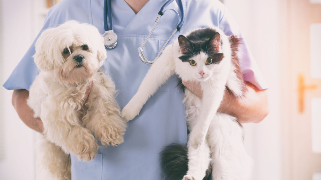 Additional Veterinary Resources