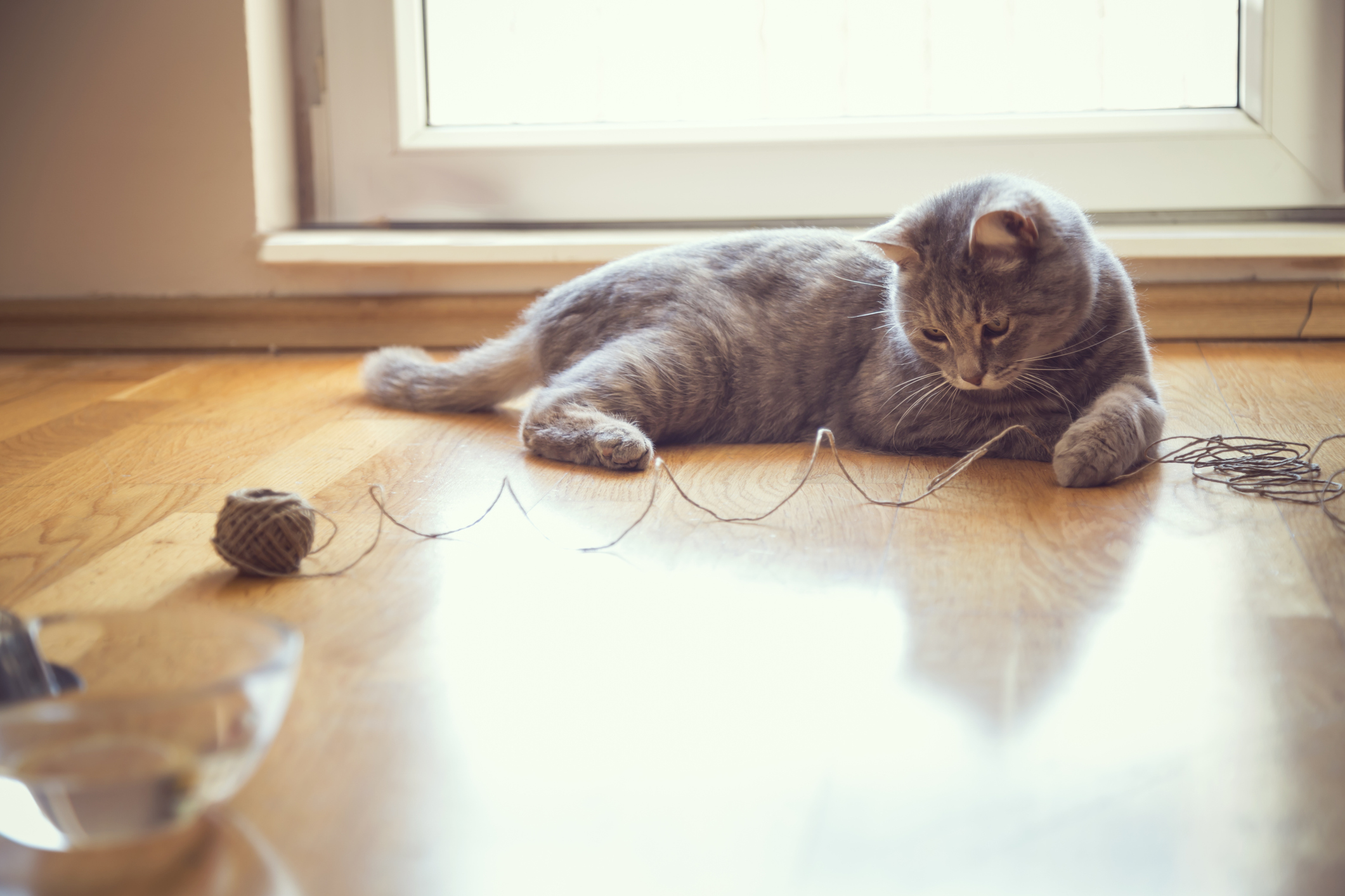 Cat Playing With A Ball Of String, Common Household Hazards For Cats, Household Cat Hazards, Pet Care Western MA, Pet Care Springfield MA, Pet Care Wilbraham MA