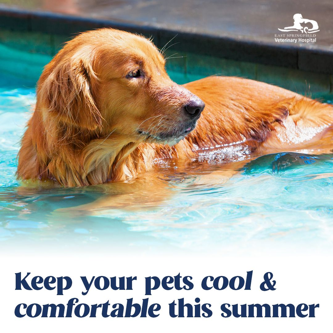 Warm Weather Pet Safety, Summer Pet Safety Tips, Pet Safety Tips, Pet Care Tips, Summer Pet Care