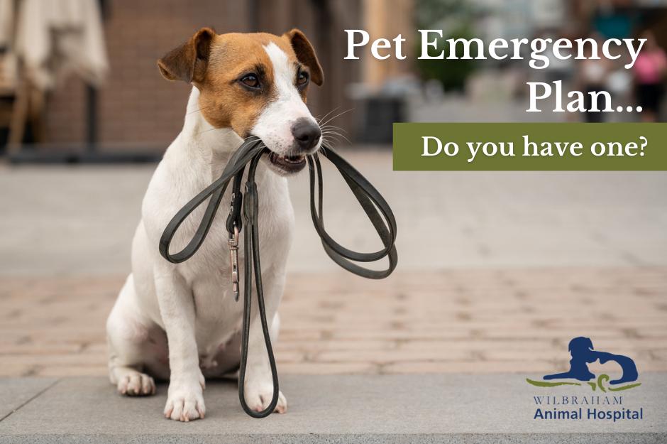 Pet Disaster Preparedness, Pet Emergency Tips, Pet Emergency Preparation, Protect Pets In Emergency